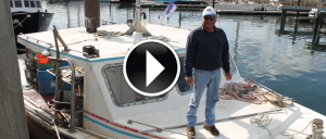 SeaMule-Video