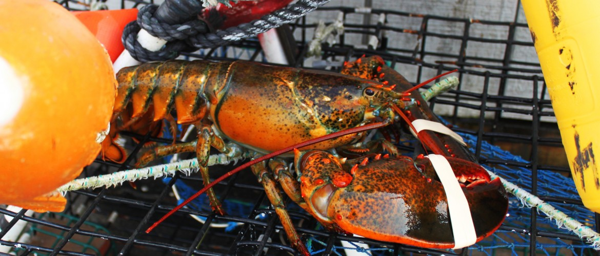 What We Catch – Newport Lobster Shack